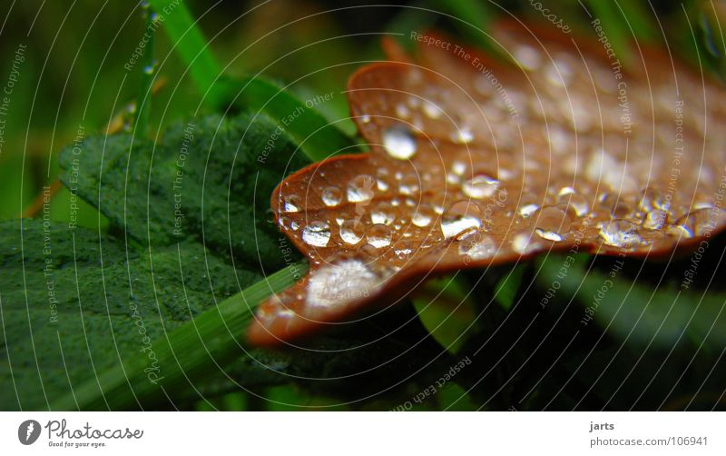 Leaf Autumn Rain Wet Drops of water Rope Damp