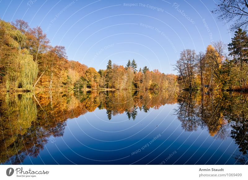 Autumn forest at the lake Life Relaxation Calm Tourism Nature Landscape Sky Horizon Climate Beautiful weather Park Forest Lakeside Fantastic Far-off places