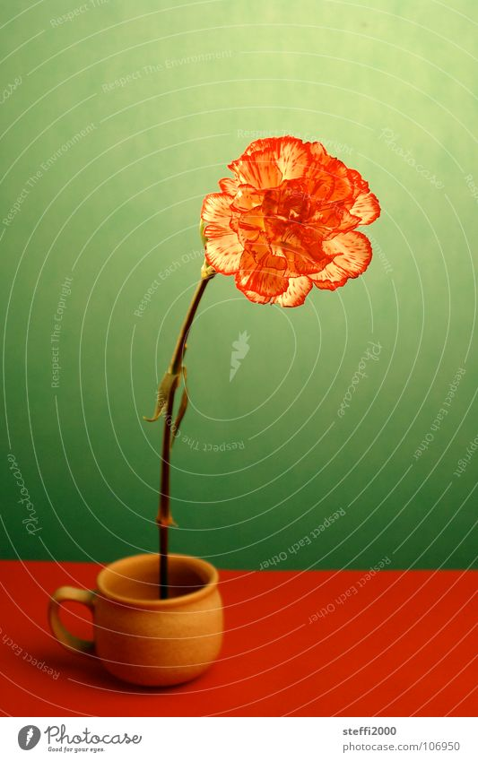 flower Flower Cup Red Green Delicate Fragile Transience Strong Fresh Whimsical Unnatural Interior shot Contrast Placed Abstract in front of green background