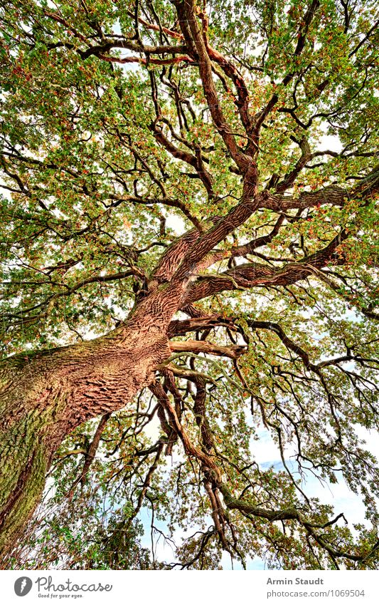 Sky Nature Plant Green Summer Tree Far-off places Forest Autumn Natural Exceptional Moody Brown Growth Idyll Power