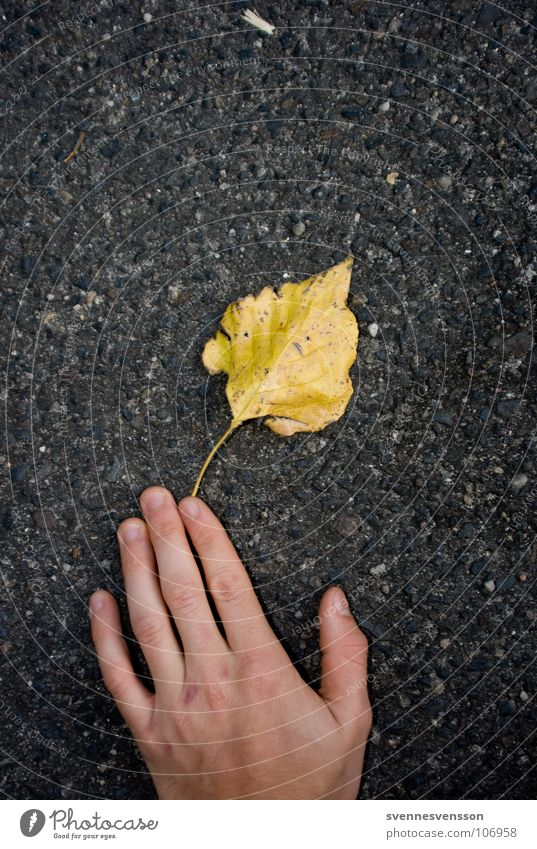 Hand Plant Leaf Autumn Skin Concrete Fingers Asphalt Catch