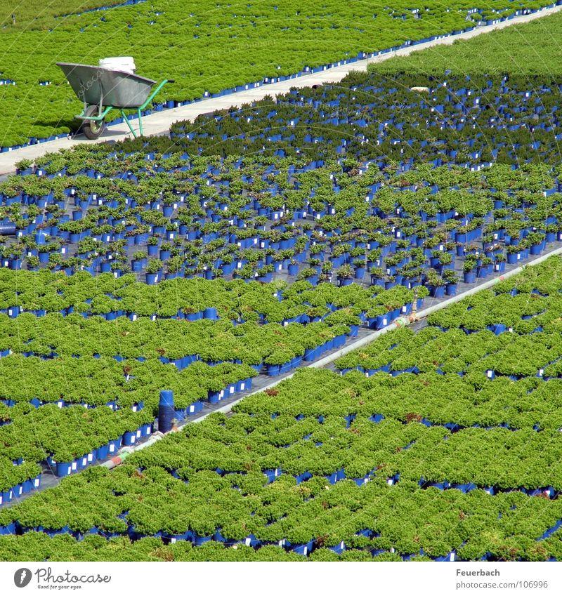 Flower Green Blue Plant Colour Work and employment Autumn Garden Line Arrangement Break Agriculture Duesseldorf Pot Horticulture