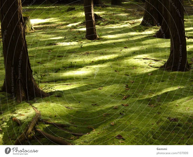 mossy forest Calm Garden Nature Landscape Park Touch Soft Emotions Serene Loneliness Colour Mysterious Dark green Discern Enchanted forest Thought Japan Smooth