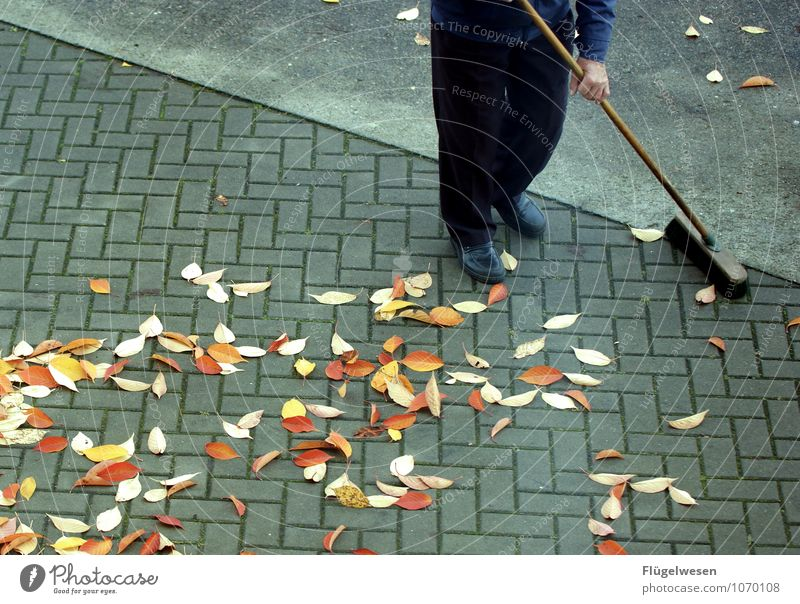 Leaf Autumn Clean Cleaning Sidewalk Personal hygiene Pavement Autumn leaves Autumnal Parking lot Autumnal colours Early fall Broom Broomstick Automn wood Sweep