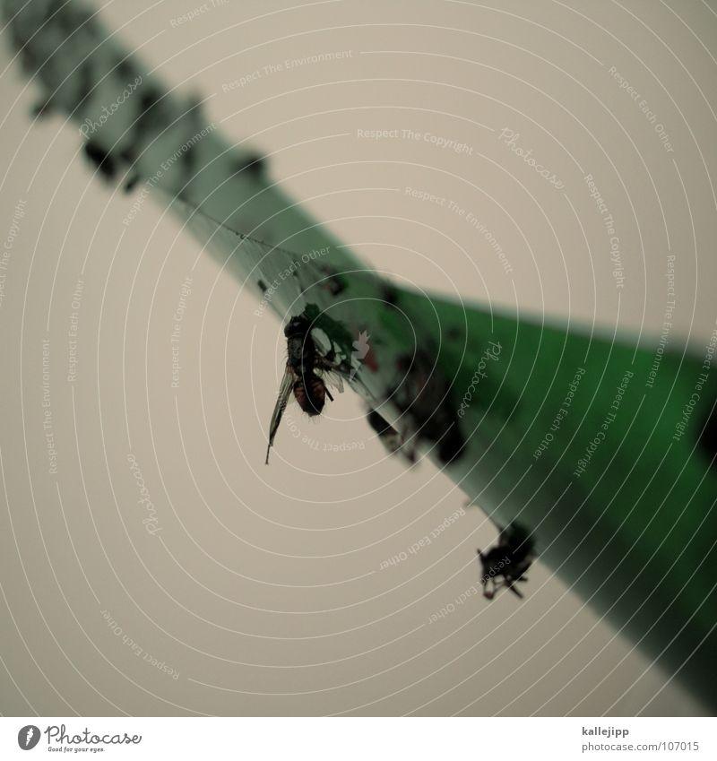 Calm Death Fly Insect Poison Calculation Stick Plagues Adhesive Ambush Fidget Glue Nuisance Flytrap