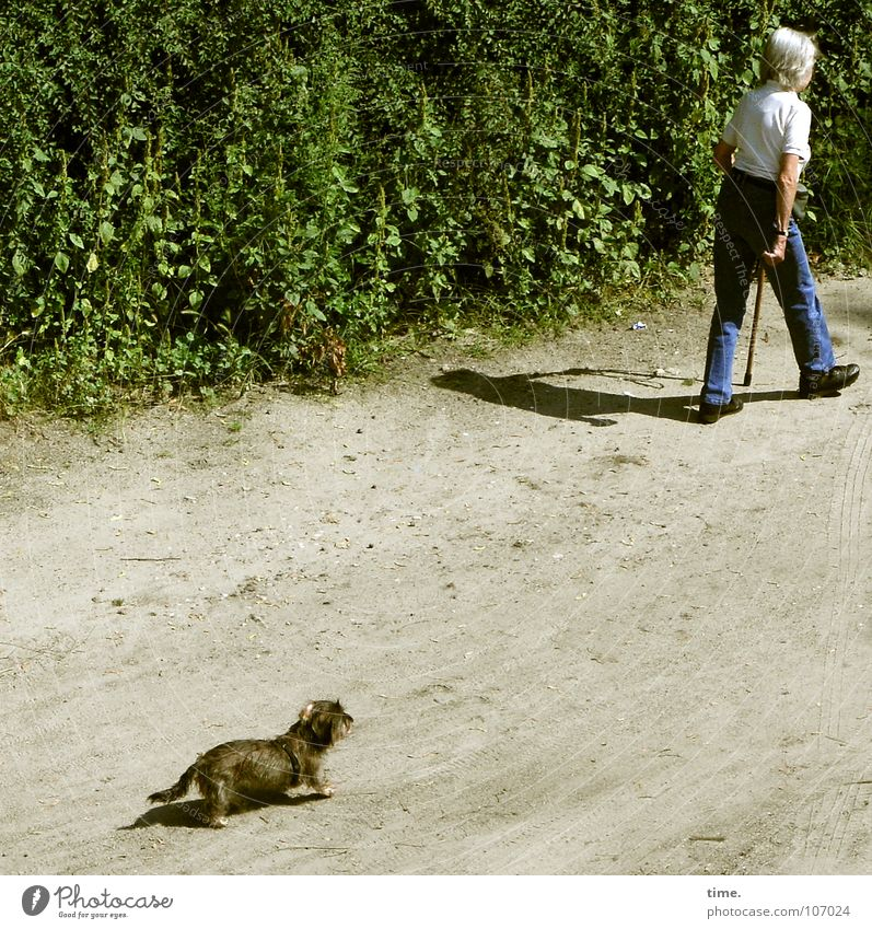 Woman Dog Old Adults Sand Park Walking Rope Bushes To go for a walk Individual Trust Odor Mammal Backwards Hedge
