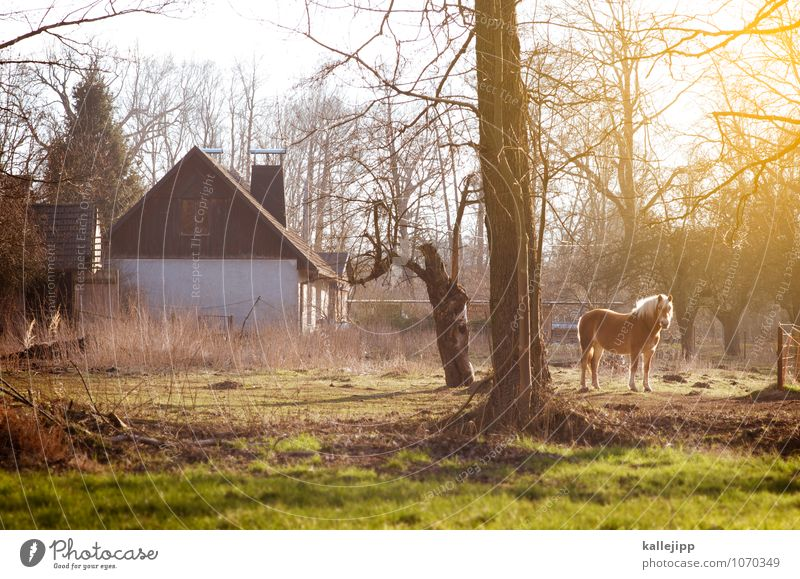 house & horse Agriculture Forestry House (Residential Structure) Detached house Building Animal Horse 1 Glittering Farm Living or residing Brandenburg Pasture