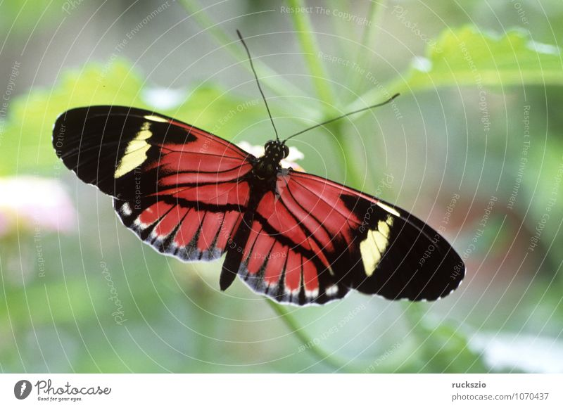Pink Insect Butterfly Exotic Virgin forest