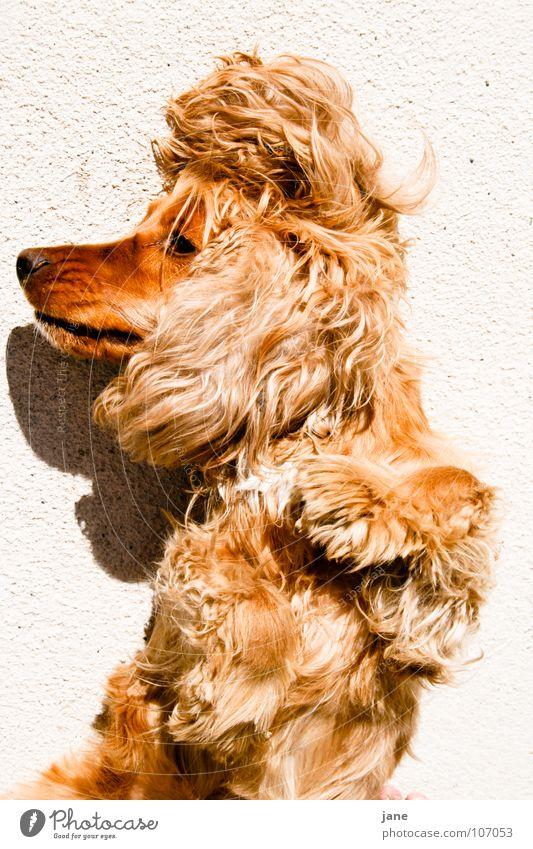 Dog Sun Summer Animal Relaxation Sleep Posture Cozy Mammal Goof off