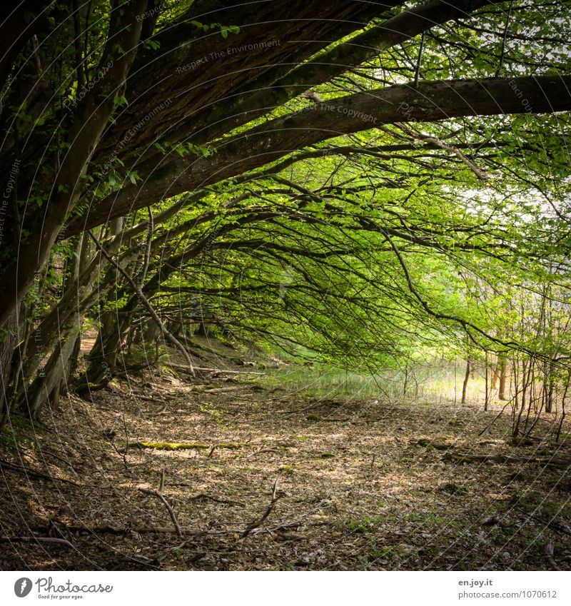 Nature Plant Green Summer Tree Leaf Landscape Forest Environment Spring Lanes & trails Growth Idyll Climate Branch Protection