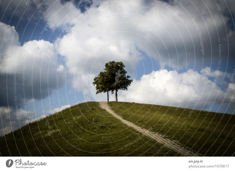 Sky Nature Blue Plant Green Summer Tree Landscape Calm Clouds Environment Meadow Grass Lanes & trails Above Together