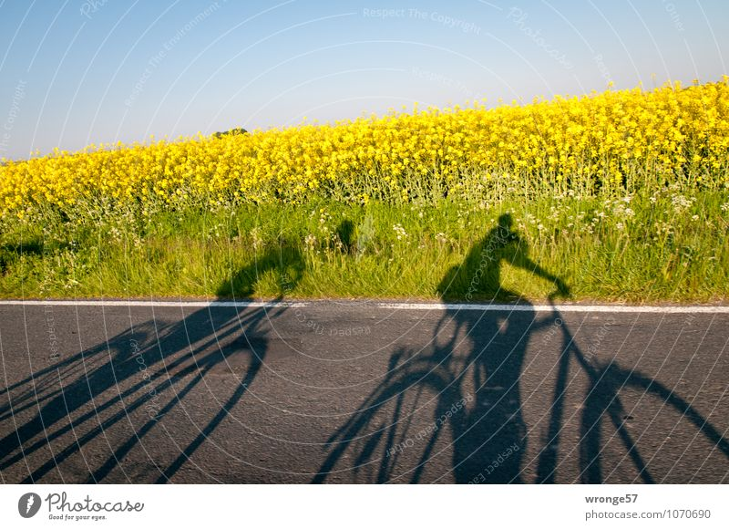 ghost drivers Trip Cycling tour Summer Human being Couple 2 Nature Plant Sky Cloudless sky Beautiful weather Blossom Agricultural crop Canola field
