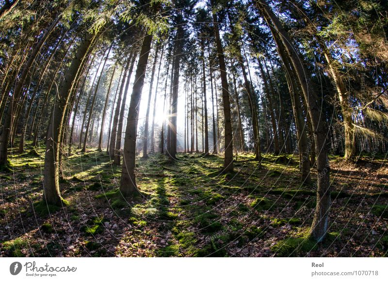 Nature Plant Green Sun Tree Relaxation Landscape Winter Forest Spring Bright Contentment Earth Trip Beautiful weather Elements