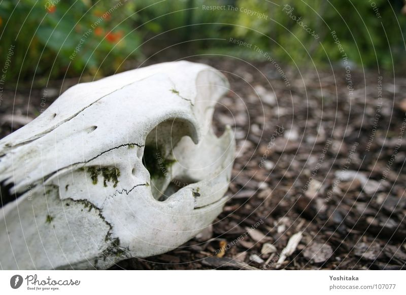 White Calm Loneliness Animal Death Head Wood Garden Brown Empty Floor covering Transience Peace Longing Mammal Skeleton