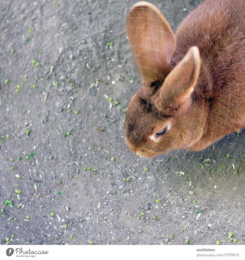 eavesdropping attack Animal Pet Animal face Pelt Zoo Petting zoo Hare & Rabbit & Bunny Hare ears Rabbit's foot 1 Observe Feeding Listening Looking Friendliness