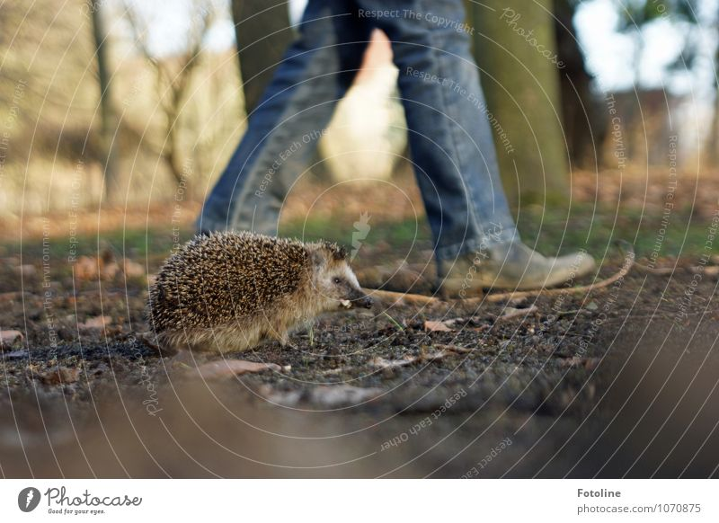 Race hedgehog vs. girl Environment Nature Plant Animal Elements Earth Sand Spring Beautiful weather Tree Garden Park Wild animal 1 Free Bright Small Near Cute