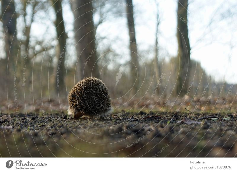 900 spines Environment Nature Plant Animal Elements Earth Sand Spring Beautiful weather Tree Park Field Wild animal 1 Bright Small Near Natural Brown Hedgehog
