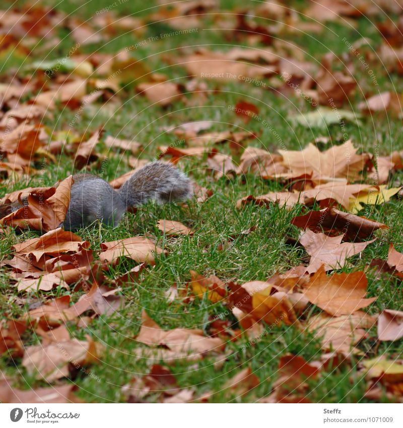 Nature Green Leaf Animal Autumn Meadow Grass Brown Search Hide Autumn leaves Autumnal November Hiding place Squirrel October