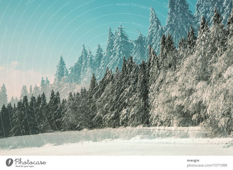 Double winter landscape Healthy Vacation & Travel Winter Snow Winter vacation Nature Sunlight Climate Climate change Weather Beautiful weather Ice Frost