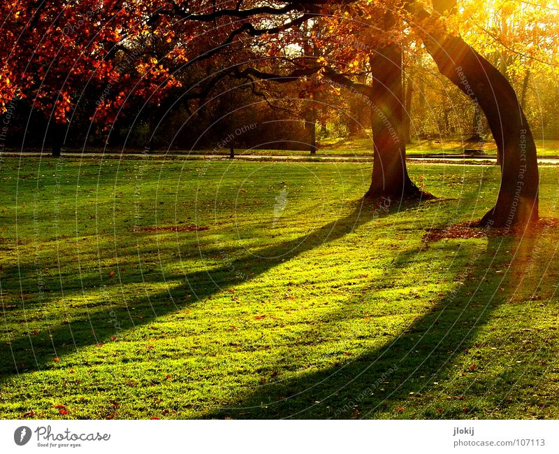 evening mood Tree Park Green Meadow Grass Growth Autumn Shadow Back-light Sunset Evening Afternoon Leaf Trimmed Garden Celestial bodies and the universe