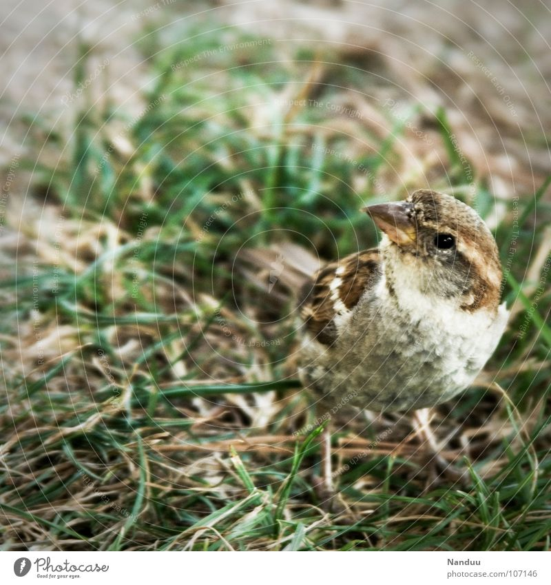 Summer Animal Meadow Bird Search Free Curiosity Dry Sparrow
