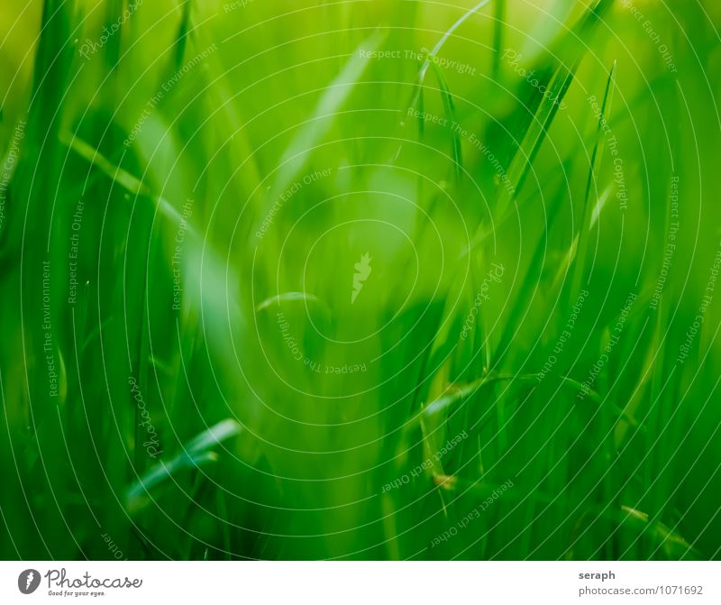 Blades of grass Common Reed Floral Grass Blade of grass Marsh grass Green Nature filigree Plant Meadow Blur Herbs and spices Environment Leaf Biology Botany