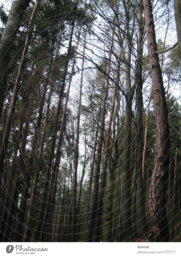tree trunks Tree Treetop Tree trunk Forest