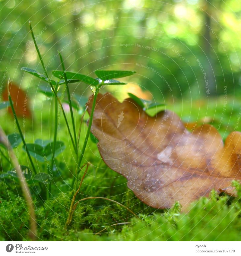 After the rain Autumn Clover Oak tree Leaf Green Grass Brown Grass green Damp Forest Meadow Near Worm's-eye view Patch of light Calm Search Find Discover Pure