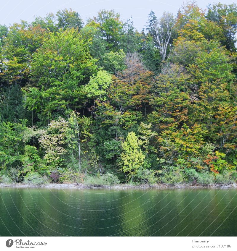 Nature Water Tree Leaf Forest Autumn Lake Landscape Coast Austria Wilderness Mountain lake