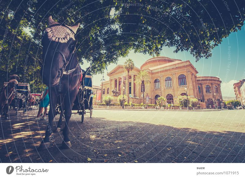 Vacation & Travel City Animal Travel photography Lifestyle Tourism Trip Places Culture Italy Historic Manmade structures Horse Capital city Mediterranean