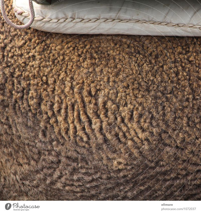 undulated Animal Farm animal Pelt Camel 1 Cushion String Soft Brown Pink White Calm Colour photo Subdued colour Exterior shot Close-up Detail Pattern