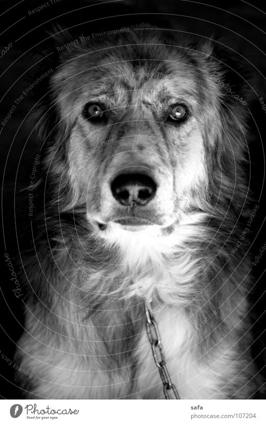 Dog White City Animal Black House (Residential Structure) Eyes Dark Garden Head Metal Fear Poverty Nose Gloomy