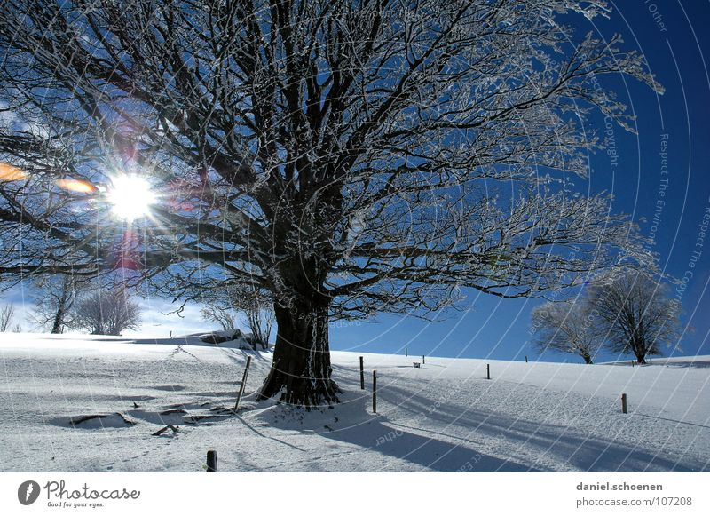 Christmas card 2 Sunbeam Winter Black Forest White Deep snow Hiking Leisure and hobbies Vacation & Travel Background picture Tree Snowscape Horizon Loneliness