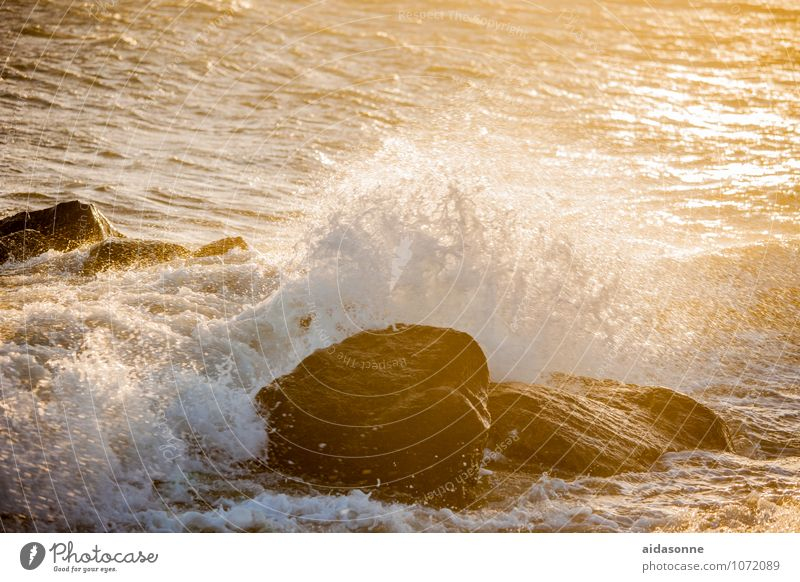 Baltic wave Landscape Water Drops of water Sunrise Sunset Sunlight Gale Rock Waves Coast Baltic Sea Strong White crest Surf Mecklenburg-Western Pomerania