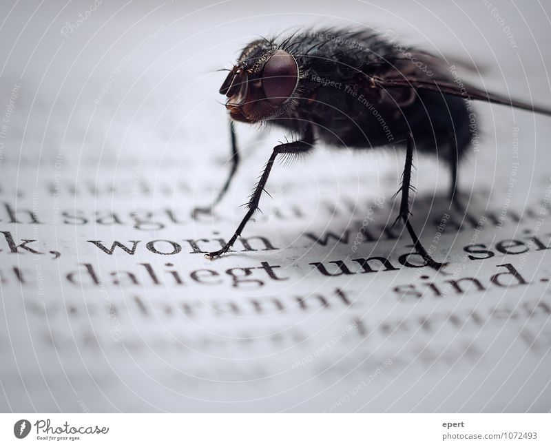 Mr. Fly and the Prophets Book Insect 1 Animal Characters Crawl Reading Wait Near Culture Stagnating Transience Bible Text Repellent Threat Colour photo