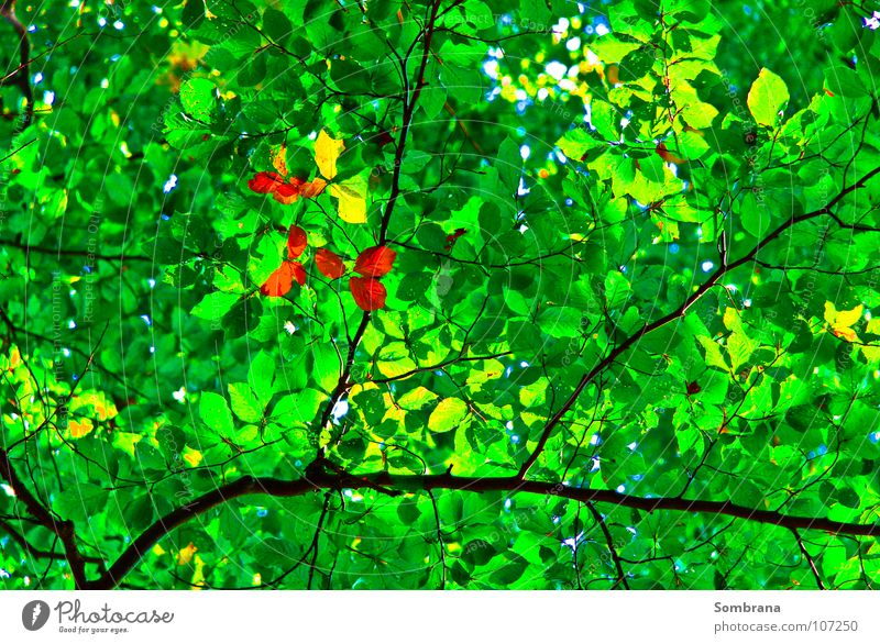 Autumn In Spring Middle Green Orange Yellow Leaf Tree Branch Roof Delicate Nature Forest Translucent Transience