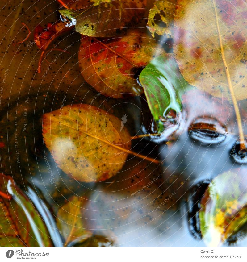 waterbed Autumn Multicoloured Leaf Wet Puddle Autumnal colours Seasons Bad weather Green Watercolor Water puddle Muddled Glittering Film of oil Surface tension