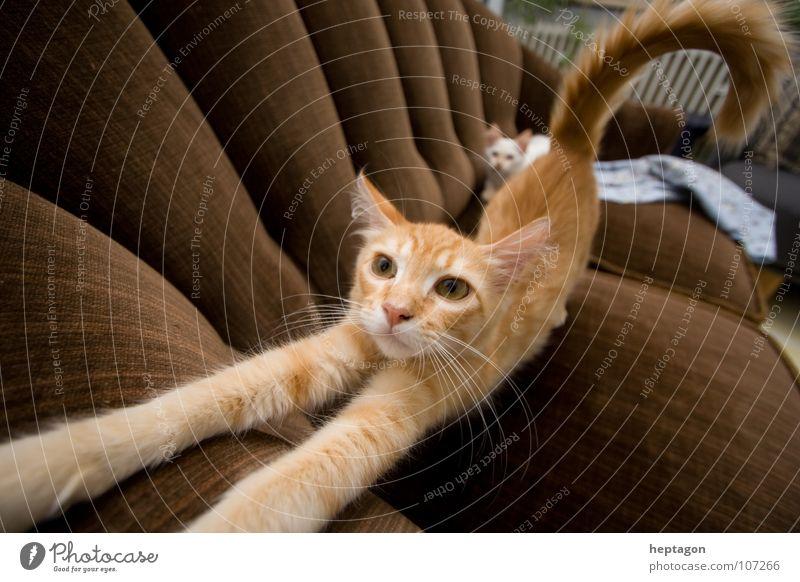 Cat Animal Trust Sofa Traffic infrastructure Fatigue Living room Boredom Mammal Room