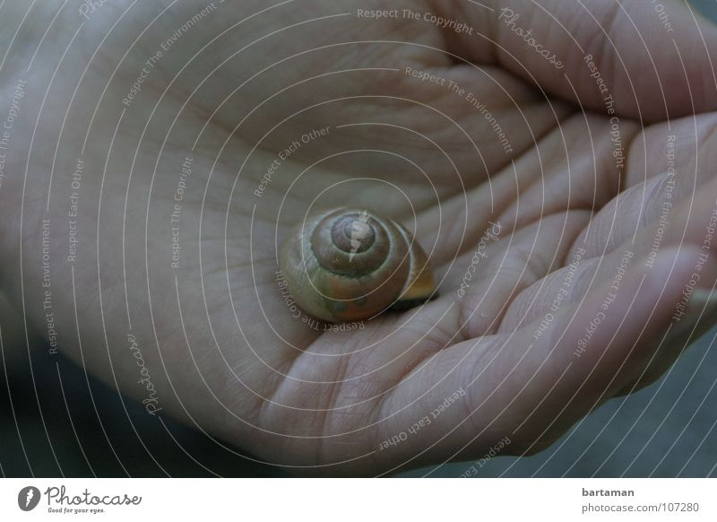 Hand Animal House (Residential Structure) Lie Fingers Empty Middle Snail Slowly Snail shell Domicile Palm of the hand