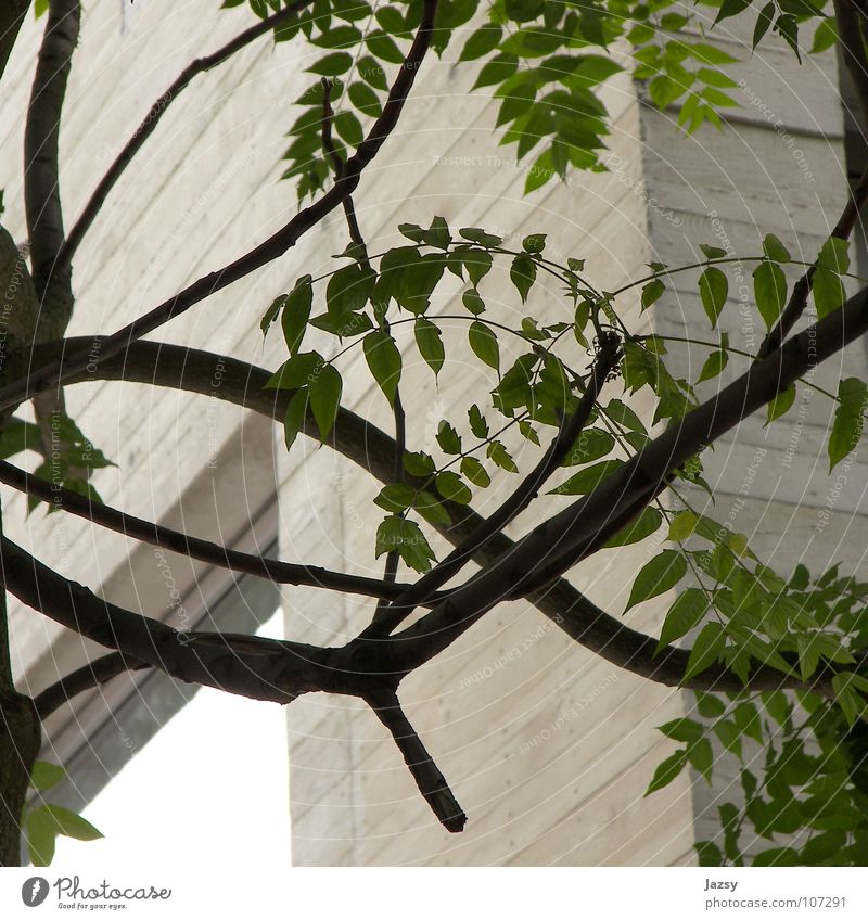 Nature Tree Leaf Wood Concrete Modern Natural Middle Material New building