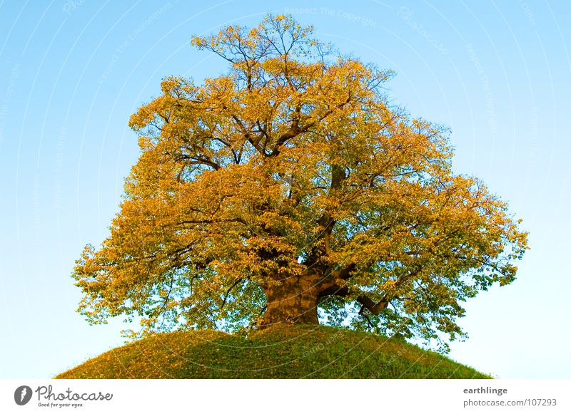 Old Sky Green Loneliness Yellow Autumn Mountain Orange Branch Transience Hill Retirement Tree Digital photography Autumn leaves Sublime