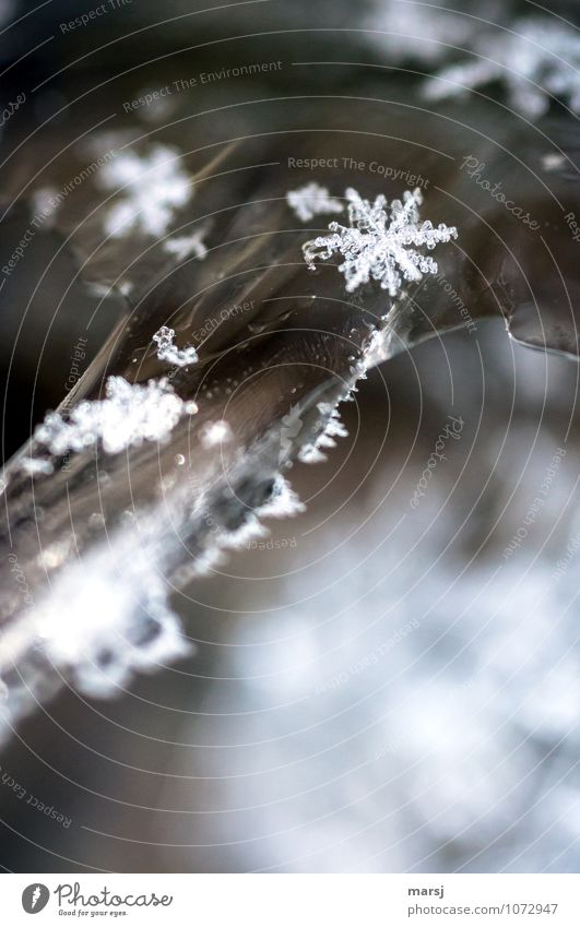 Perfect, these artworks of nature Nature Winter Ice Frost Snow Exceptional Gigantic Cold Small Hope Humble Surprise Snowflake Ice crystal Diminutive Symmetry