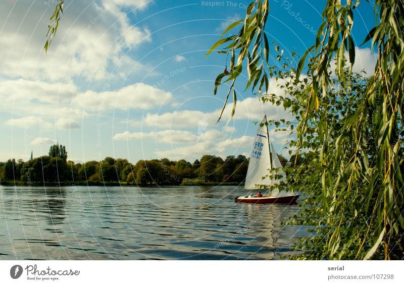 Water Sky Tree Green Blue Plant Summer Clouds Watercraft Coast Hamburg Leisure and hobbies Sailing Beautiful weather Sailboat Maritime