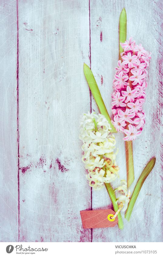 Hyacinth on light wood background Style Design Garden Decoration Feasts & Celebrations Valentine's Day Mother's Day Birthday Nature Plant Spring Flower Bouquet