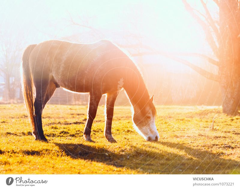 Nature Vacation & Travel Summer Animal Autumn Meadow Spring Lifestyle Leisure and hobbies Field Power Beautiful weather Horse To feed Pony Farm animal