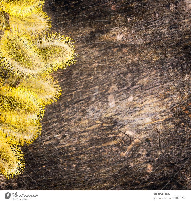 Nature Old Plant Dark Yellow Spring Style Wood Background picture Garden Brown Design Decoration Soft Card Pollen