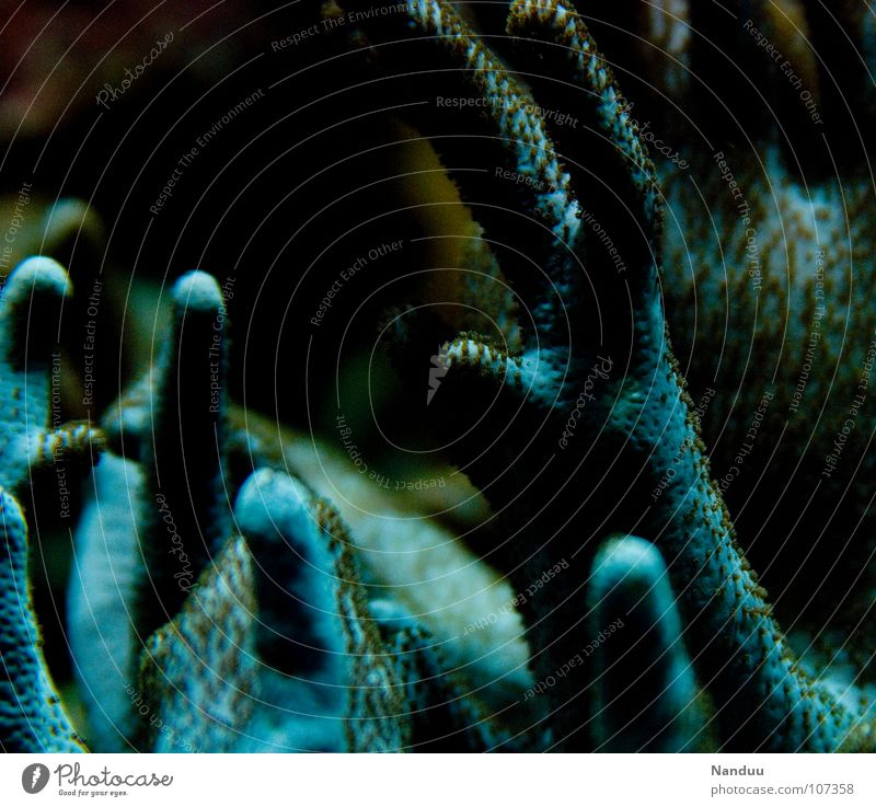 Dishwashing gloves of horror Ocean Hand Fingers Animal Exceptional Blue Whimsical Coral Nightmare Strange Eerie Marine animal Colour photo Underwater photo
