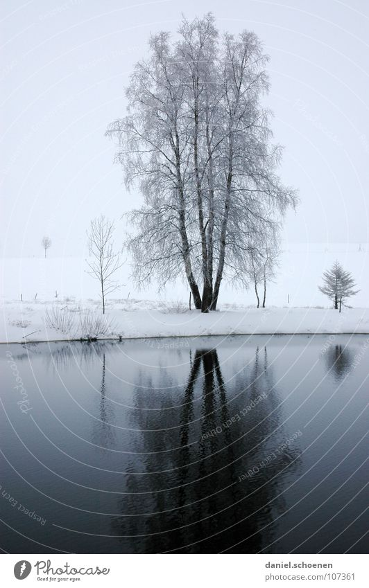 Christmas card 3 Rural Country life Winter Black Forest White Deep snow Vacation & Travel Jinxed Background picture Snowscape Horizon Loneliness Lake Pond