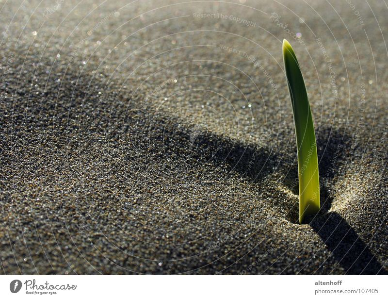 sand growth Moody Green Growth Darken Germ Germinate Image format Beach Visual spectacle Shadow play Plant Hesitate Maturing time Exterior shot Calm