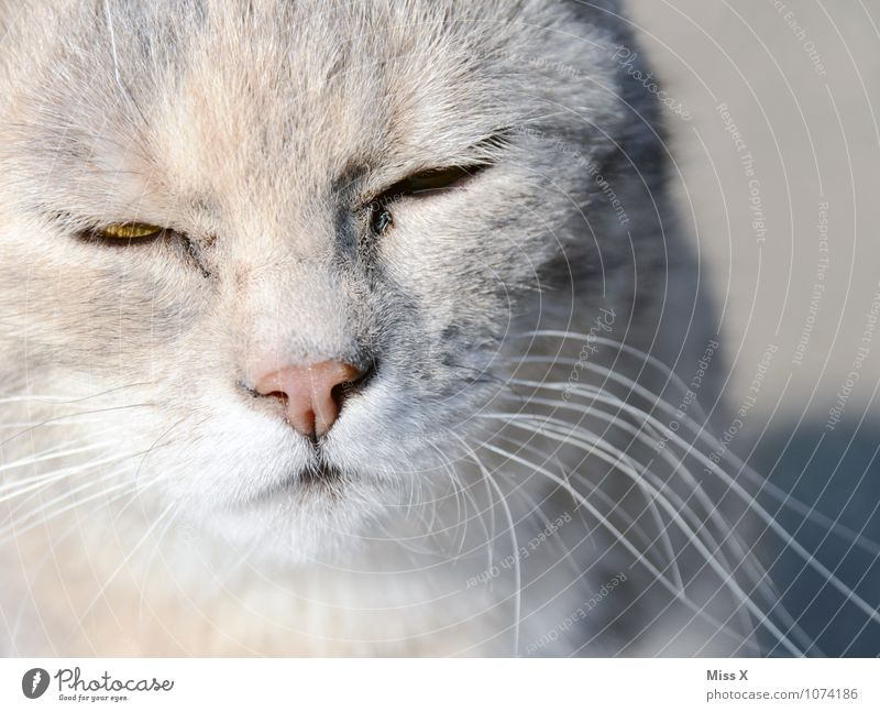 Happiness is... a cat Pet Cat Animal face Pelt 1 Cute Soft Gray Emotions Moody Contentment Warm-heartedness Serene Whisker Purr Cat's head Colour photo
